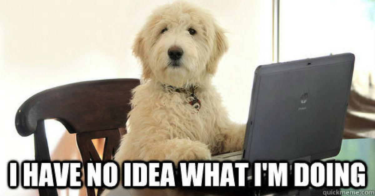 dog at laptop