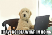 Predictive Analytics & Machine Learning Explained Through Dog Memes