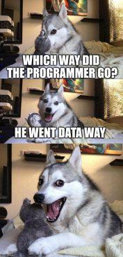 Programmer Dog Meme